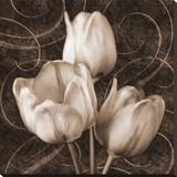 Sepia Tulip II