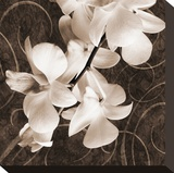 Sepia Orchid I
