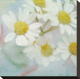 White Daisy II