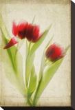 Red Tulips III