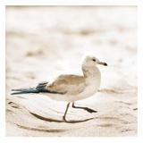 Seagull III