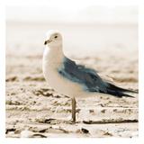 Seagull IV