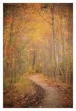 Winding Autumn Path