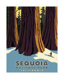 Sequoia