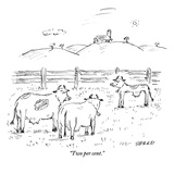 """Two per cent"" - New Yorker Cartoon"