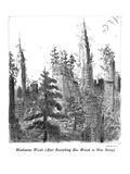 Manhattan Woods - New Yorker Cartoon