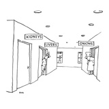 A hospital hallway with signs over the doors  One reads 'Kidneys ' the ot… - New Yorker Cartoon