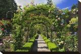 Butchart Gardens II