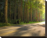 Hoh Rain Forest  Upper Hoh Road