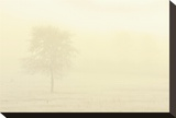 Solitary Tree in Morning Fog