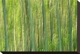 Tree Abstraction III