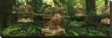 Birdcage Forest