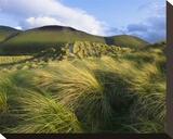 Ross Behy Sand Dunes  Ireland III