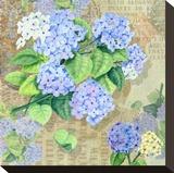 Blue Hydrangea II