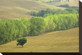 San Quirico Tree Line