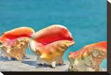 Three Conchs