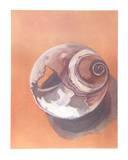 Moon Shell