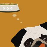 Peek-A-Boo: Pug