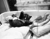 Kitten Laundry