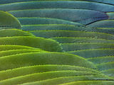 Military Macaw Wing Feathers  Ara Militaris  Peru