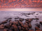 Stromatolites at Dawn  Shark Bay  Western Australia
