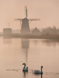 Swans and Windmill  Texel  Netherlands