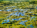 Palm Islands (Aerial)  Okavango Delta  Botswana