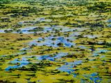 Palm Islands (Aerial)  Okavango Delta  Botswana