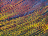 Tundra Autumn  Wrangell-St Elias National Park  Alaska