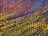 Tundra Autumn  Wrangell-St Elias National Park  Alaska