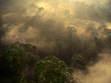 Sunrise over Lowland Rainforest (Aerial)  Danum Valley  Sabah  Borneo