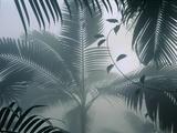 Palms in Mist