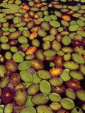 Lily Pads  Okavango Delta  Botswana
