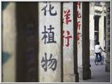 Man Riding Bicycle Along Street  Chikanzhen  Guangdong  Guangdong  China