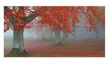 Árboles Rojos