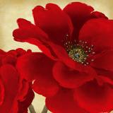 Red Peony I