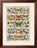 Histoire naturelle : papillons