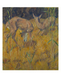 Rehe Im Schilf  1909