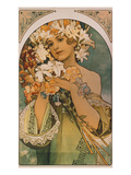 Blume  1897