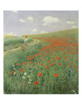 Summer Landscape with Poppy Field  1902
