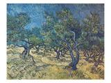 Olivenbaeume (Les Oiliviers)  1889