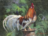 Red And White Rooster Impression sur toile par Nenad Mirkovich
