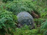 Riesenschildkroete auf Galapagos