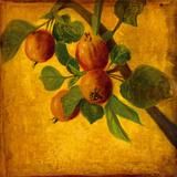 Les Fruits IV