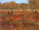 Poppy Fields In Red