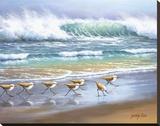 Piper Wave