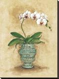 Classic Orchid II
