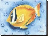 White Banded Island Fish