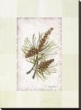 Sierra Pine ll