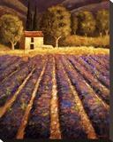 Lumiere De Provence